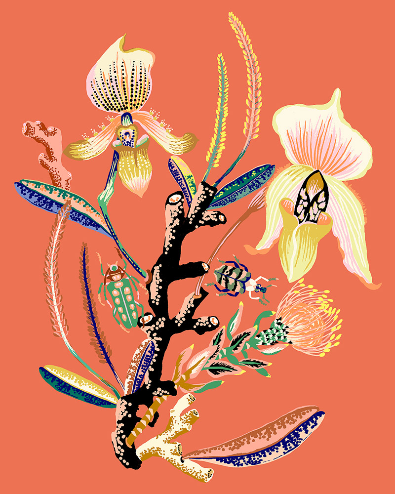 """Sarah Gordon: Orchid Vignette, 2020 Giclee print on Somerset Velvet paper 255gsm 10"""" x 8"""""""