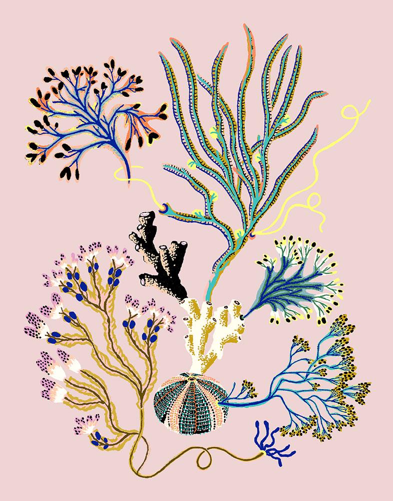 """Sea Garden Vignette, 2020, Giclee print on Somerset Velvet paper 255gsm, 14"""" x 11"""", $60"""